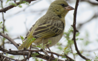 Guidelines for the Identification of Birds: Step 2 – Now for the Bill