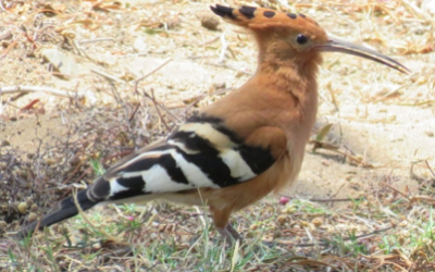 Guidelines for the Identification of Unknown Birds: Upcoming Series