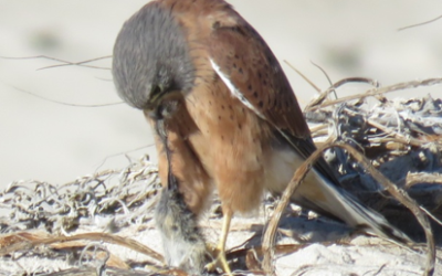 Guidelines for the Identification of Birds: Step 6 – Behaviour