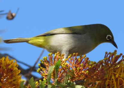 Bird calls, beware!